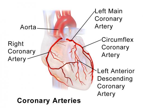 коронарної артерії